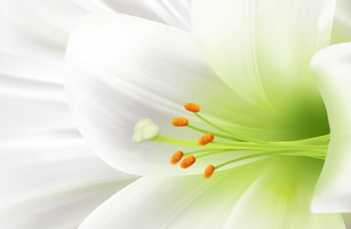Цветы-обереги