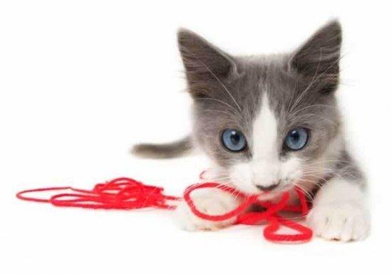 Рекомендации по выбору игрушек для котят
