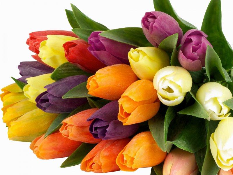 Советы по хранению цветов